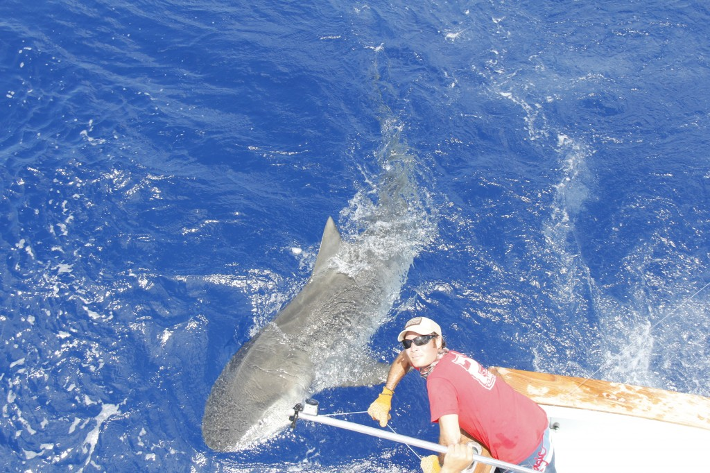 Tiger shark fishing aboard the bnm 4 17 2012 official for Islamorada florida fishing