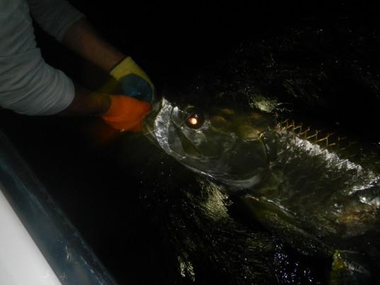Nigh Time Tarpon Fishing Biscayne Bay