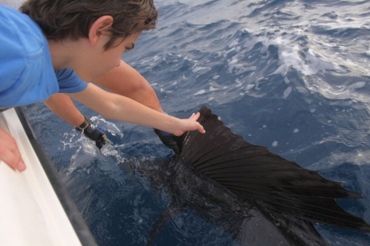 Constantino Releasing his Miami Sailfish