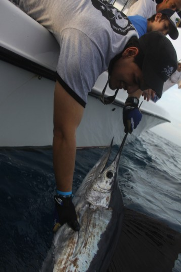 Carlos DeFillipi Landing a Miami Sailfish