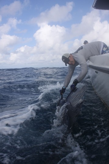 Marauder Mate Carlos DeFillipi Releasing a Miami Sailfish
