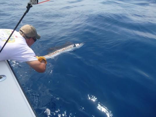 Miami Sailfish Fishing Charters