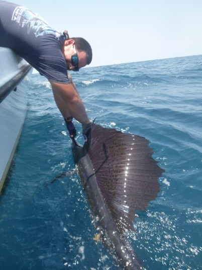 1st Mate Carlos Defillipi reviving a sailfish