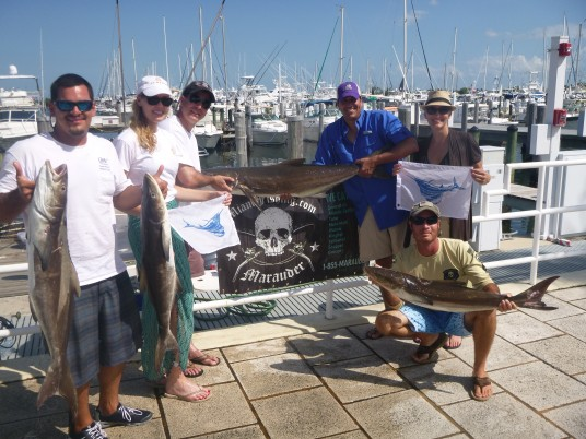 lots of cobia caught on the Marauder of Miami, FL