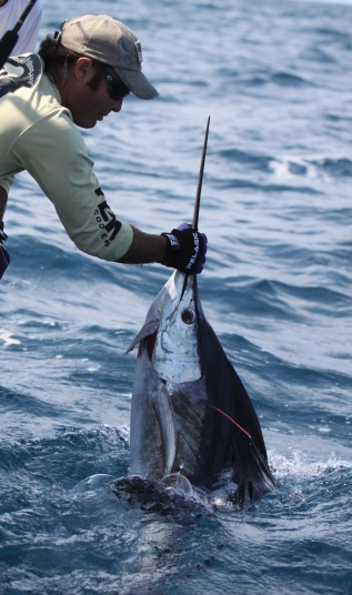 Capt. Charlie Ellis releasing a tagged miami sailfish