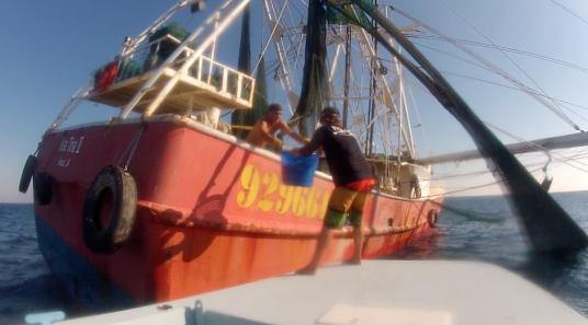 Trading Tuna for Shrimp Boat ByCatch