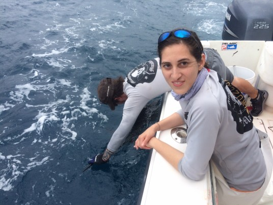 maritza sail release
