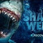 sharkweek 2014