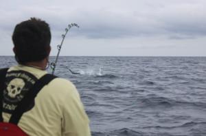 carly-martinez-jumping-sailfish