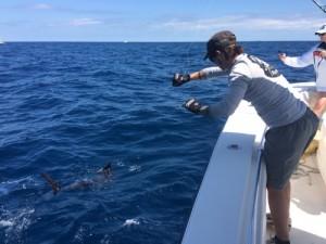sailfish-leader-touch.jpg