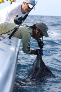 sailfish-release-billfish-tag