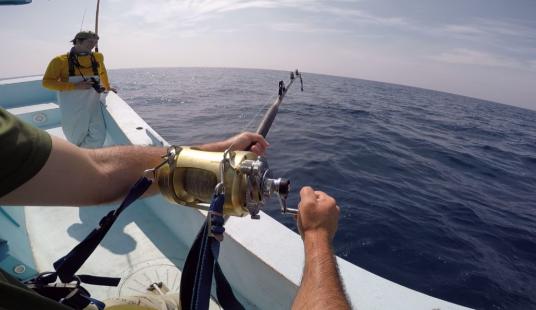 first person tuna fishing winding on a tiagra